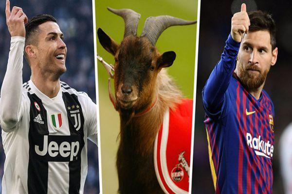 goat-trong-bong-da-3